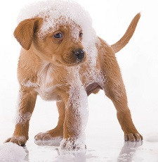 Click Here for Pet Groomer's Site